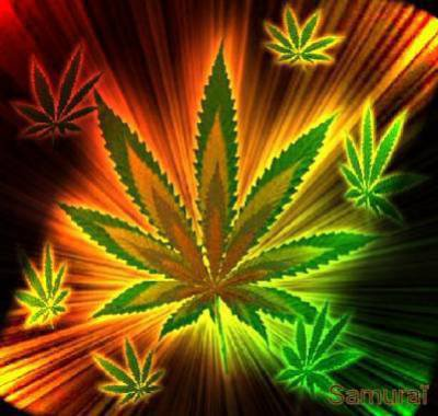T l charger cannabis collection pdf french for Livre culture cannabis interieur pdf